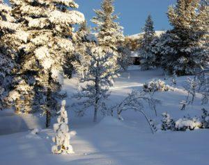 besneeuwde bomen in de kersttijd